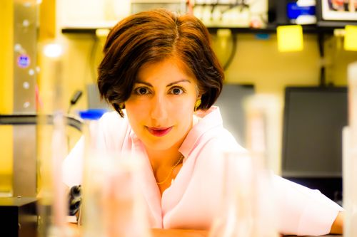 Parastoo Hashemi: Tackling Complex Biological and Environmental Problems